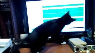 Кошка мешает сводить музыку