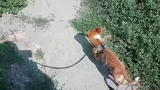VLOG: // Идём к ветиренару// Укол собаке // ШОК//
