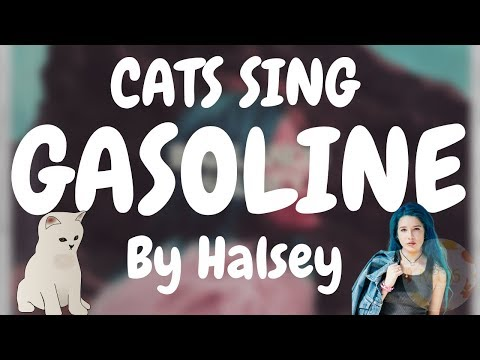 Cats Sing Gasoline by Halsey | Cats Singing Song
