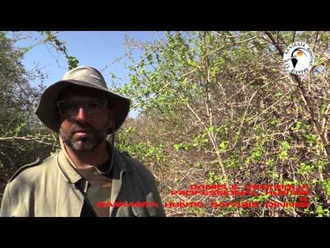 ZAMBIA - KANTANTA HUNTING SAFARIS - BUFFALO HUNT - BIG GAME HUNTING - STEP FOUR - LUANGWA VALLEY