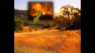 Sanoma County in California before the wildfires, vineyards, nature, travel, forests, wine region