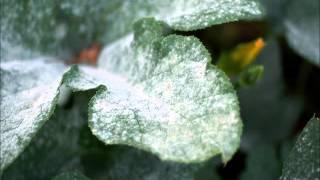 Choroby i szkodniki roślin - rozpoczęcie serii   infoUprawa