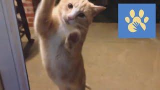 Юмор Для Поднятия Настроения Помощь Животным Забавные Кошки Приколы Дикие