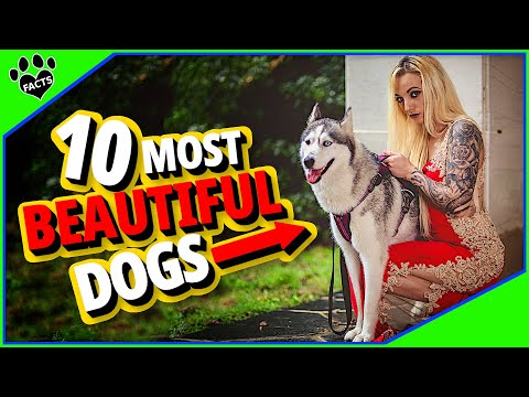 Top 10 Most Beautiful Dogs Breed In The World
