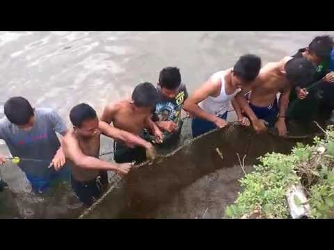 AMAZING Net Fishing - Net Fishing at ACEH Province - INDONESIA Traditional Fishing