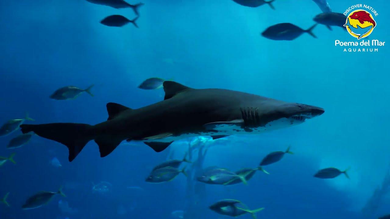 Aquarium Poema del Mar