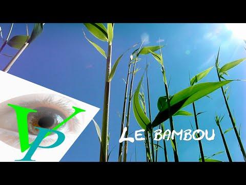 Le vent et le bambou
