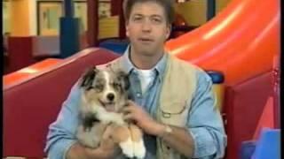 Puppy Toys And Snacks: Dikeman Dog Training
