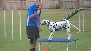 Terry & Roxy ( First Agility Run )
