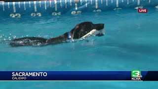 Splash dog competition open for rescue dogs