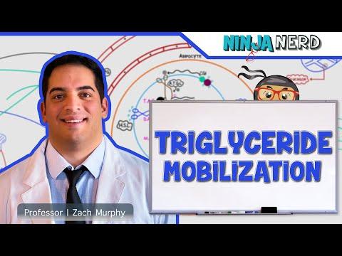 Metabolism: Mobilization of Triglycerides