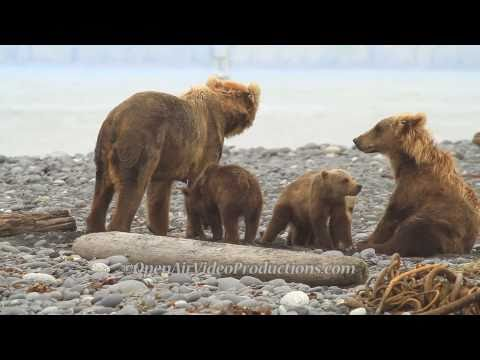 Alaska's Great Kodiak Bears - Ayakulik Adventures
