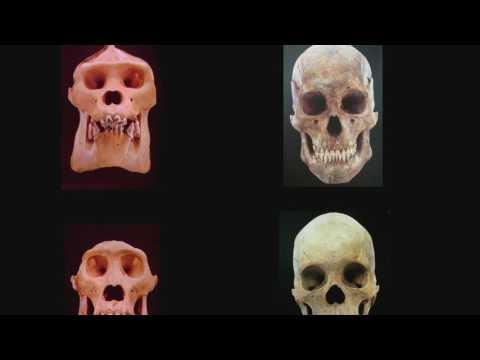 ORIGINES DE L'HUMANITÉ : LES NOUVEAUX SCÉNARIOS