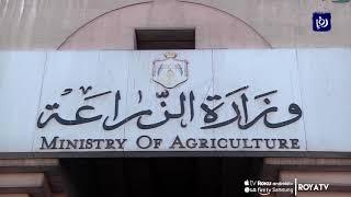 وزارة الزراعة: المملكة لم تصدر خضار وفواكه للاحتلال منذ 5 أشهر (20/12/2019)