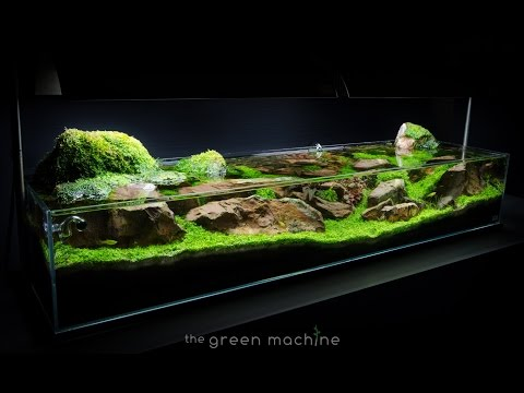 Great Aquascape Tutorial Guide: U0027Continuityu0027 By James Findley U0026 The Green Machine