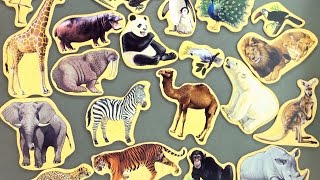 20 Animal magnets collection - Learn animals from around the world - African animals