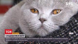 Довіра чотирилапого: британські вчені дослідили, як сподобатися коту cмотреть видео онлайн бесплатно в высоком качестве - HDVIDEO