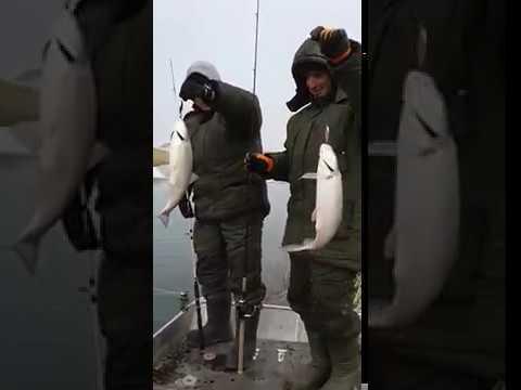 МАЯК Академия Рыбалки - видео