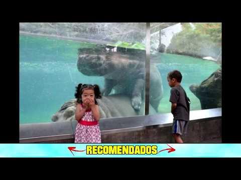 Ninos Sorprendidos En El Zoologico Youtube