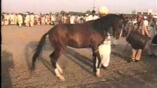 Nisar Stud Farm, Amer Nisar Khan, Kabadi Mela, Festival, Gujranwala, Horse Dancing in Pakistan