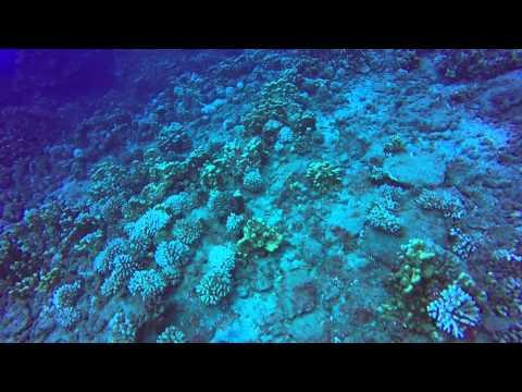 underwater easter island