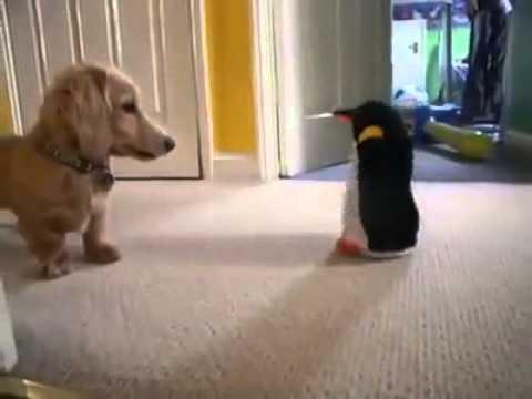 Chú cún nhắng nhít đùa giỡn với đồ chơi chim cánh cụt