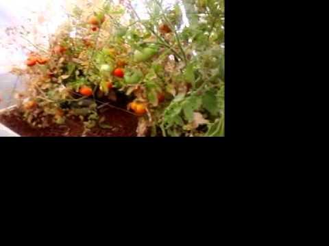 Project Indiegogo for organic aquaponics fish feed and ethanol