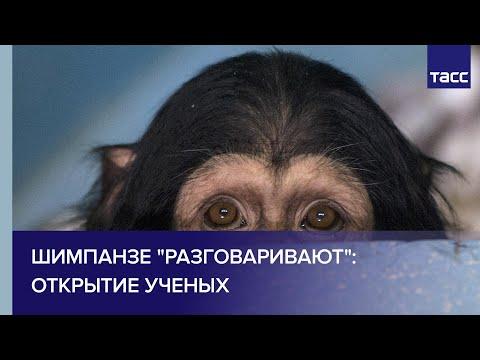 Вопрос: Что общего у косаток и шимпанзе?