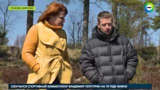 Вторая попытка  нерпенка Крошика выпустили в Ладожское озеро   МИР24