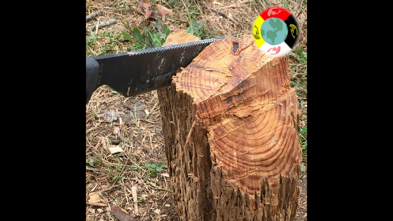 Two of the best in Southern Sap Missouri vs Georgia pine lighter pine knot fatwood  YouTube