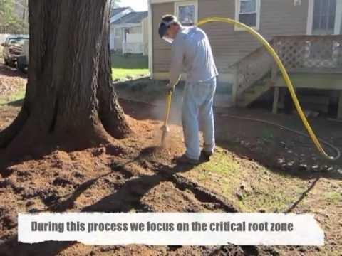 Aerating Amp De Compacting Soil Around An Oak Tree Youtube