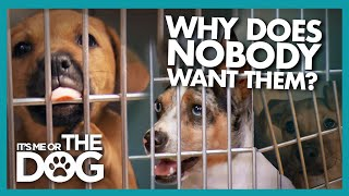 Can Training Save This Dog Turned Down for Adoption? | It's Me or The Dog