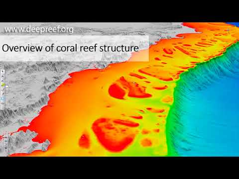 Coral Reef Bleaching  and Ocean Acidification
