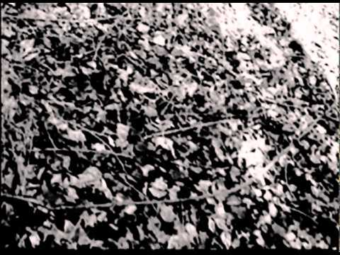 a summary of the movie blair witch project Movie the blair witch project three amateur documentary makers head, with a camera, into a mysterious wood with a reputation for supernatural horror then they start hearing things.