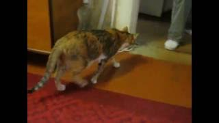 леопард- кошка нападает на хозяйку