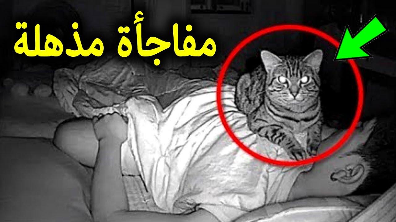 شك هذا الرجل في تصرفات قطته.. فوضع كاميرا مراقبة.. وعندما فتح الفيديو شاهد ماذا وجد !!