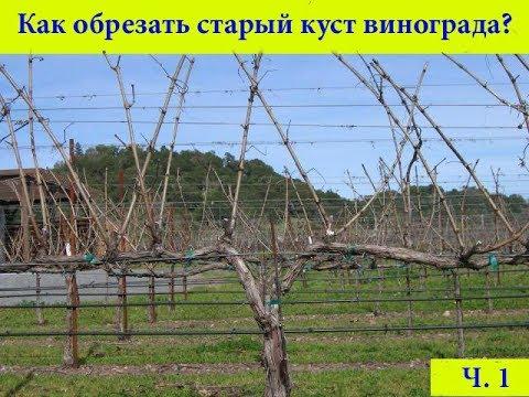Интернет-магазин саженцев винограда лучших сортов. Качественный посадочный материал, гарантия результата. Постоянная информационная поддержка. Простая технология посадки.