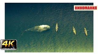 Моби Дик нападает на выживших. В сердце моря (2015).4k