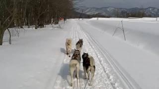 2011.03.04~06の2泊3日で北海道、十梨別渓谷で犬ぞり体験ツアーに 参加...