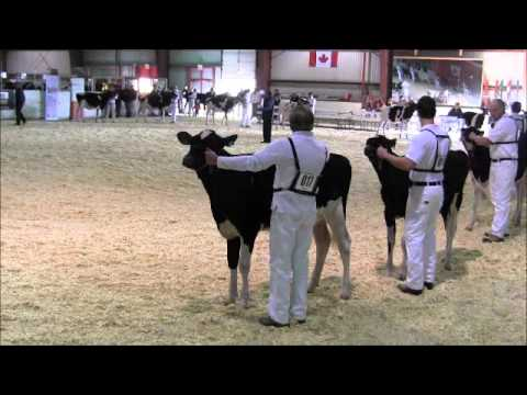 2012 Eastern Ontario - Western Quebec Championship Show - Class 2
