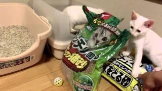 猫のトイレについてです 猫のトイレの砂選びや、お掃除などについて説明...