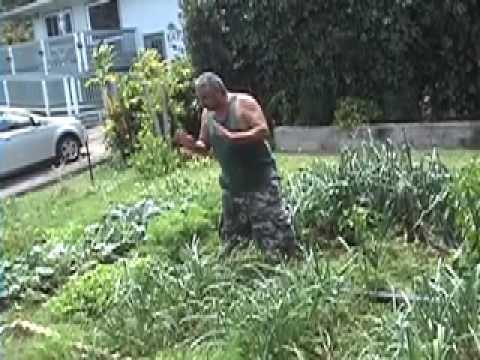 Charmant Sustainable Gardening In Hawaii   YouTube