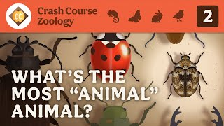 Whats the Most Animal Animal? Crash Course Zoology #2