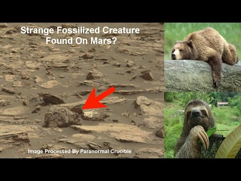 Strange Fossilized Creature Or Statue Found On Mars?