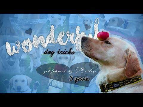 WONDERFUL DOG TRICKS - MARLEY - 3 YEARS! ♡