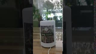 [초록느낌]편백나무 피톤치드 공기정화기 안개분사 세트