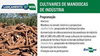 Lançamento das mandiocas de indústria BRS 417, BRS 418 e BRS 419
