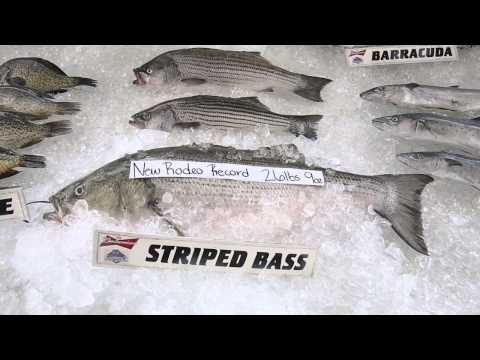 Mississippi Deep Sea Fishing Rodeo Saw Two Records Broken