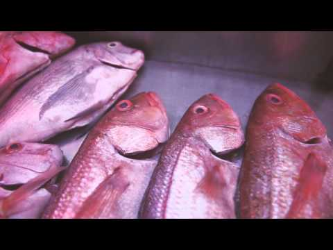 CSIR Research On Mercury In Fish Informs Consumer Choices
