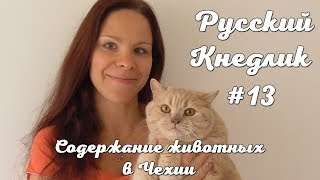 Русский Кнедлик #13. Содержание животных в Чехии